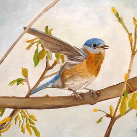 Wingy Eastern Bluebird by Angeles M Pomata