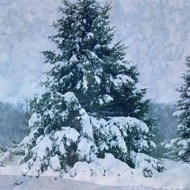 Winter Beauty by Luther Fine Art