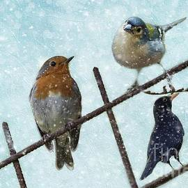 Eva Lechner - Winter Birds