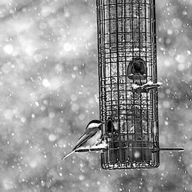 Betsy Knapp - Winter Blessing Chickadee