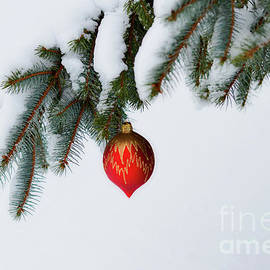 Winter Finery by Deb Halloran