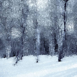 Jack Zulli - Winter Forest Black And White