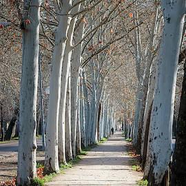Winter In Aranjuez Spain by Joan Carroll