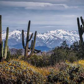 Saija Lehtonen - Winter In The Southwest