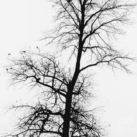 Winter by Jeni Gray