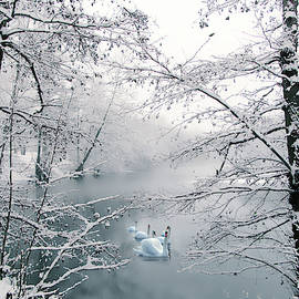 Jessica Jenney - Winter Journey