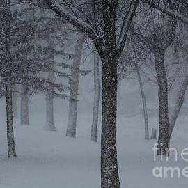 Lori Tordsen - Winter