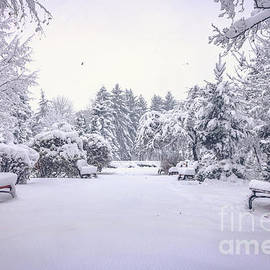Claudia M Photography - Winter scene in the park