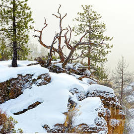 Winter Snow Rocky Cliff Fallen Pine by Robert C Paulson Jr