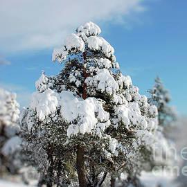 Elaine Manley - Winter Trees
