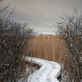 Scott Thorp - Winters Path