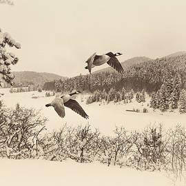 John Bartelt - Wintry Flight
