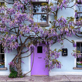 Wisteria Tree House - Inistioge - Ireland by Fergal Gleeson