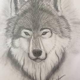 Wolf Portrait by Samuel Jaycox