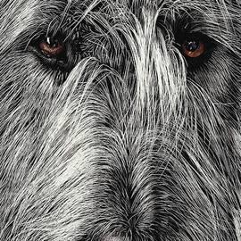 Wolfhound by Elena Kolotusha