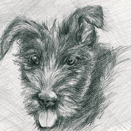 Wolfhound Puppy Sketch by MM Anderson