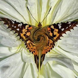 Wonderfly by Carel Schmidlkofer