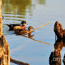 Debbie Stahre - Wood Ducks