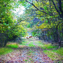 Wooded Lane by Brian Wallace