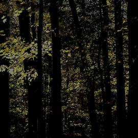 Photography by Tiwago - Woodland Morn #1