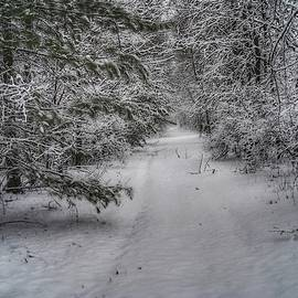 Woodland Trail In The Winter by Michael Panno