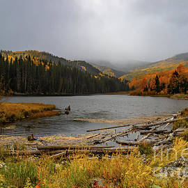 Woods Lake Fog by Norma Brandsberg