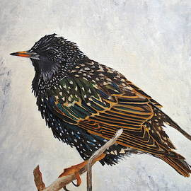 Wrapped Up - European Starling by Angeles M Pomata