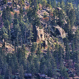 Wrinklely Rocks and Pine Trees by Paulette B Wright