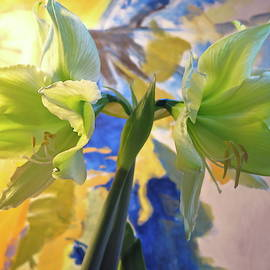 Yellow Amaryllis with Painted Backdrop by Bonnie See