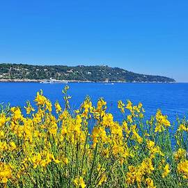 Yellow and Blue by Andrea Whitaker