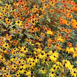 Yellow And Orange Garden Flowers by Carol Groenen