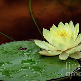 Yellow Beauty Upon A Lily Pad by Sabrina L Ryan