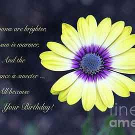 Yellow Daisy Happy Birthday by Sharon McConnell