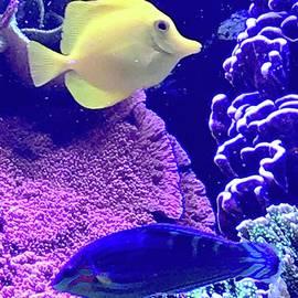 Yellow Fish Blue Fish by Barbie Corbett-Newmin