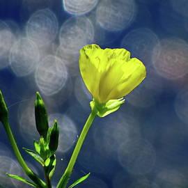 Yellow Flashlight with Beautiful Bokeh by Lyuba Filatova