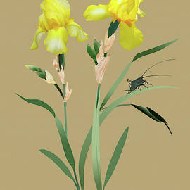 IM Spadecaller - Yellow Iris and Cricket