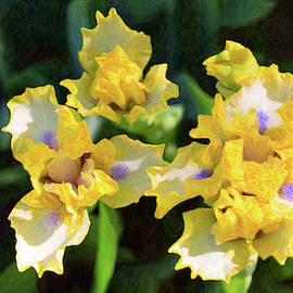 Yellow Irises - Joyful Reunion - By Omaste Witkowski by Omaste Witkowski