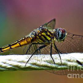Dragonfly by Lita Kelley