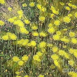 Yellow meadow by Veikko Suikkanen