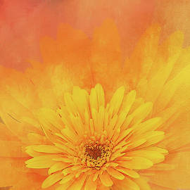 Yellow Orange Gerbera by Terry Davis