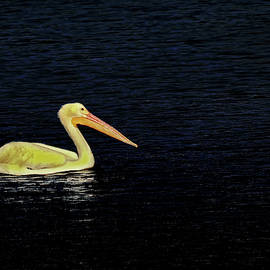 Rosalie Scanlon - Yellow Pelican