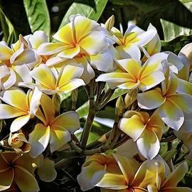 Yellow Plumeria In Hawaii by Lynn Bauer