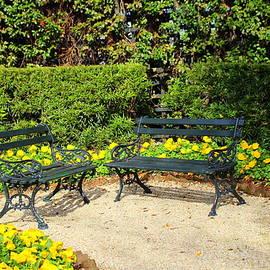 Yellow Poppy Garden by Cynthia Guinn