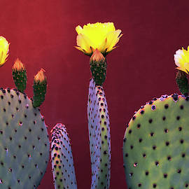 Yellow Prickly Pear  by Saija Lehtonen