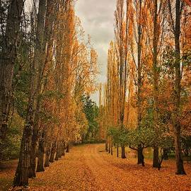 Yellow Road by Jerry Abbott