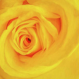 Yellow Rose 1 by Trey Foerster