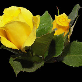 Yellow Rose LK by Michael Armstrong