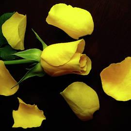 Yellow Rose With Decorative Petals On Black  by Johanna Hurmerinta