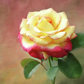 Yellow Rose with Red Tips 3 by Isabela and Skender Cocoli