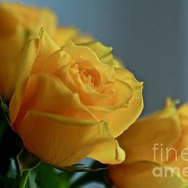 Yellow Roses by Ann E Robson